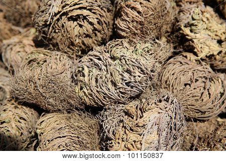 Rose of Jericho