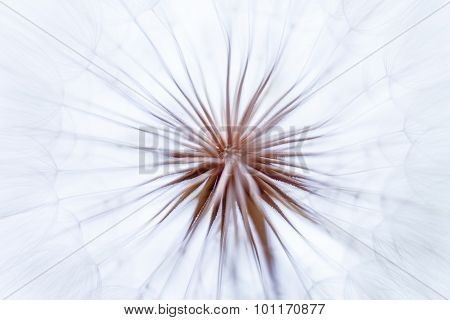 Vintage Watercolor Abstract Background - Monochrome Dandelion Flower