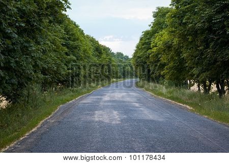 Lonely Road Among Green Trees