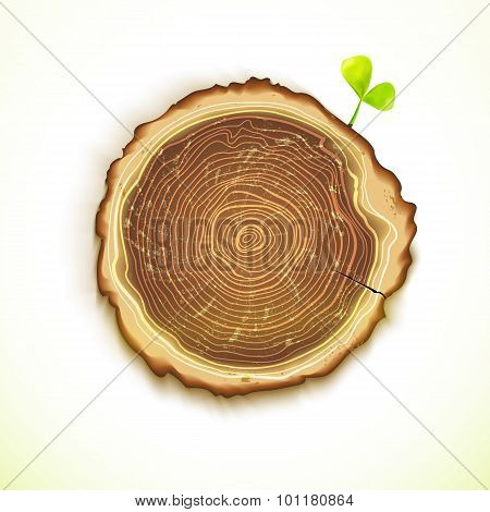 Vector Drawing Tree Stump With Young Leaf