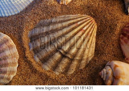 Seashells with red sand still life. Sunset colors.