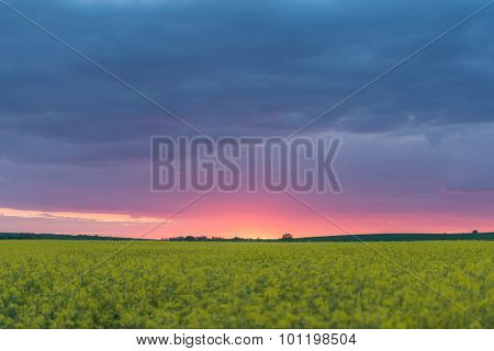 yellow rape field and clouds