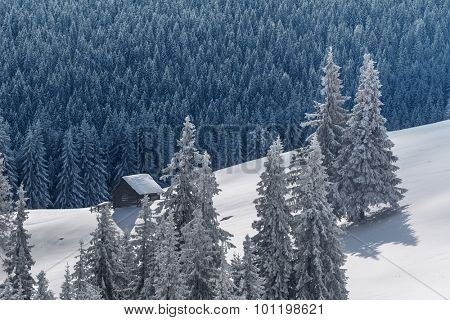 Fantastic winter landscape with dramatic sky and snowy trees. Carpathians, Ukraine, Europe.