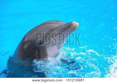 Smiling dolphin in Loro Parque in Puerto de la Cruz on Tenerife, Canary Islands, Spain