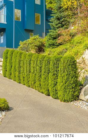 Trees in front of the house, front yard. Landscape design.