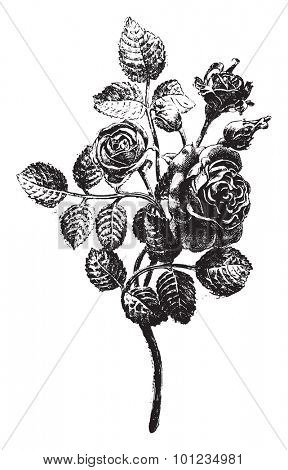Wrought iron roses, executed in Mr. Favier workshop, vintage engraved illustration. Industrial encyclopedia E.-O. Lami - 1875.