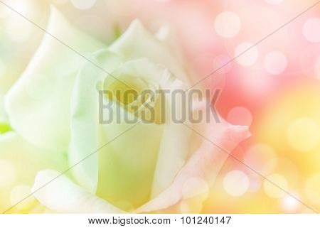 Beautiful Rose flower made with colorful filters.