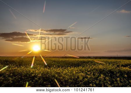 Abstract sunset / raps field