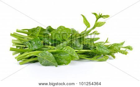 Malabar Spinach Or Ceylon Spinach Isolated On White Background