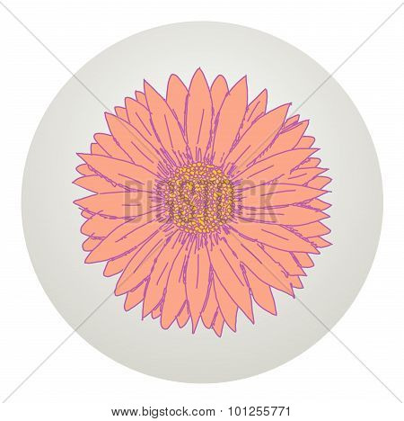 Beautiful Gerbera Flower.