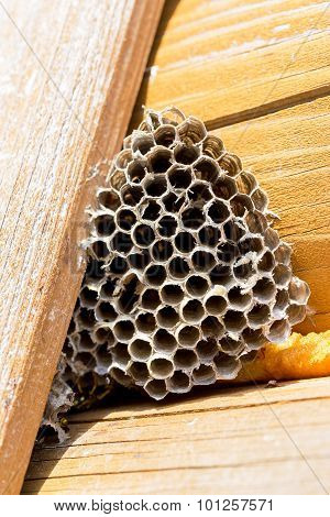 Honeycomb Hornet's Nest On The Wall Of The Wooden House. Selective Focus