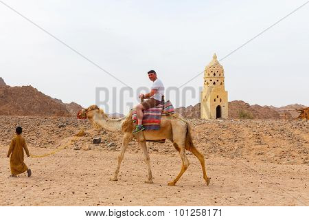 Arab Boy Rolls Tourists On A Camel.