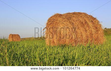 Beautiful haystacks on green lawn