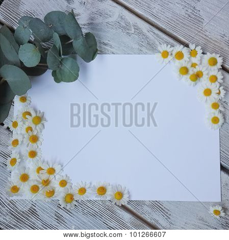 Daisy On A Wooden Table