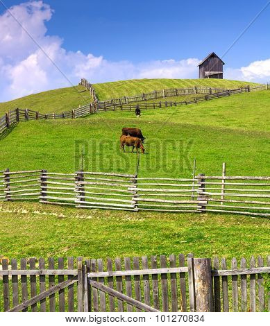 Farm Scene With Cows Enclosed By A Wooden Fence And Cottage On The Hill