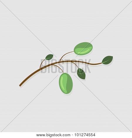 Vector modern  olive branch on gray