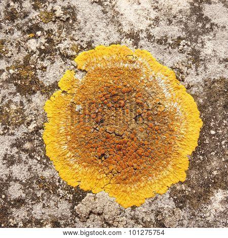 Orange and Yellow Lichen