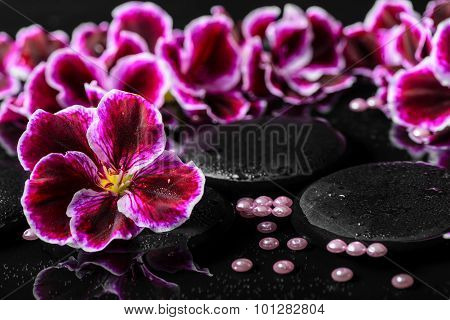 Beautiful Composition Of Geranium Flower, Beads And Black Zen Stones With Drops In Reflection Water,