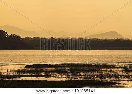 Swamp Of Arugam Bay Lagoon, Sri Lanka
