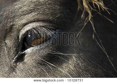Black horse face close up - photo#36