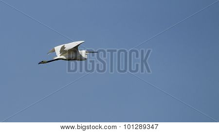 Little Egret Flying Isolated In Blue Sky