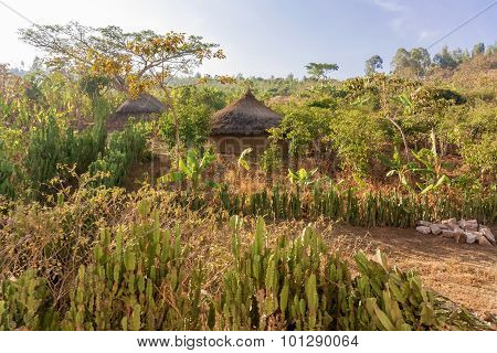 Rural Landscape In Ethiopia