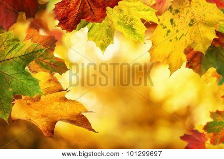 Autumn Leaves Framing A Nice Bokeh Background