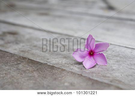 Purple Periwinkle on Wood
