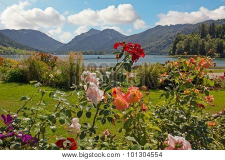 Lakeside Promenade Schliersee With Beautiful Blooming Rose Flowers And Flowerbed