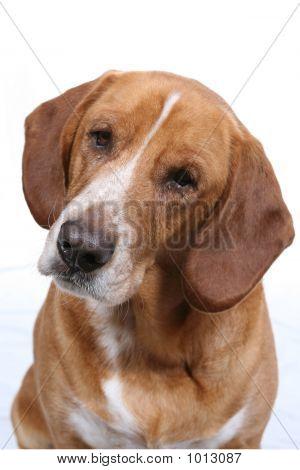 Puzzled Dog