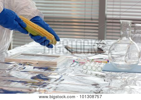 Scientist dressed in protective gear sweetcorn over the table in lab - close up