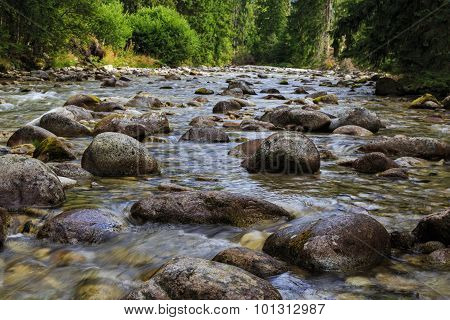 Fast Mountain River In Coniferous Forest.