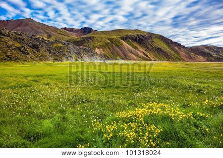 Summer trip to Iceland. The green lawn in the Valley National Park Landmannalaugar. Geothermal soars among the grass