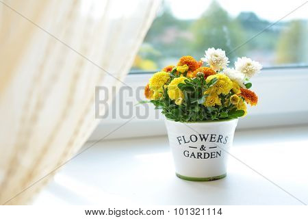 Chrysanthemum flowers in a ceramic pot