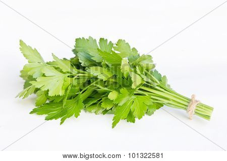 Bunch of fresh green parsley isolated