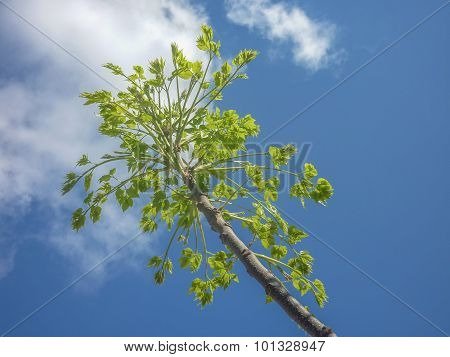Tree Branches And Leaves Against Blue Sky