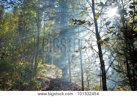 Smoke in the woods. Fire in the coniferous forest.