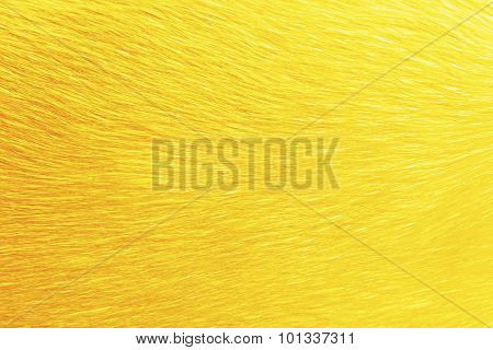 Animal Hair Dye In Golden