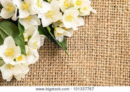 Jasmine Flowers On Jute Background. Beautiful Arrangement Of Flowers Located On Burlap Vintage Style