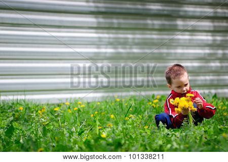The Boy Collects Dandelions