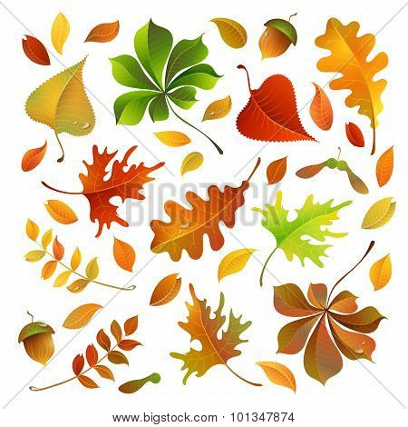 Vector Set Of Colorful Autumn Leaves.