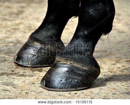 Pferd Hoof - Hufe