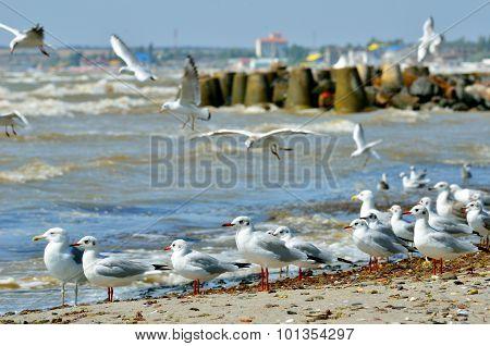 Seagulls On A Sandy Beach