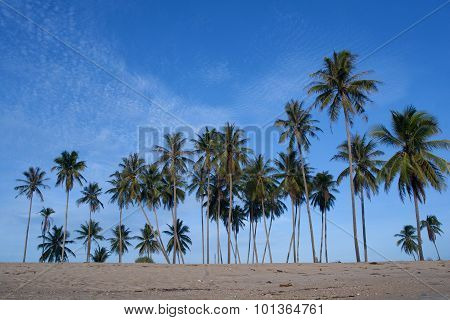 Tropical sand beach with coconut trees