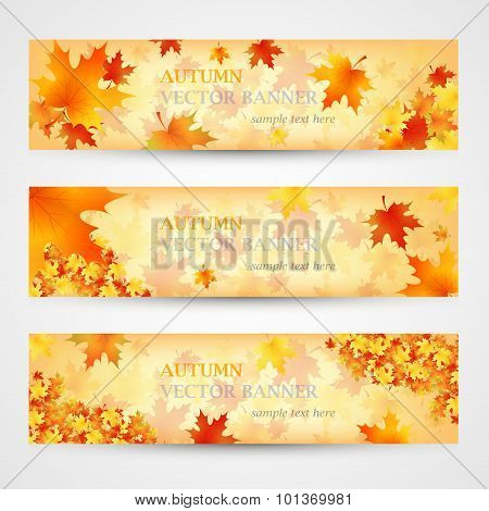 Three autumn banners with colorful leaves. Vector