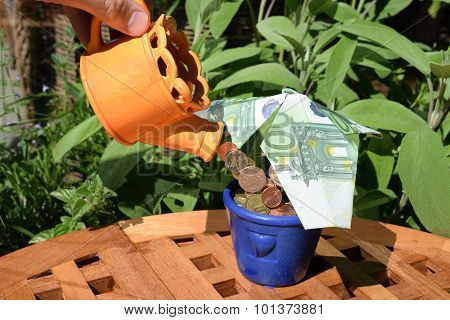 Watering The Money Tree - Nursing An Investment