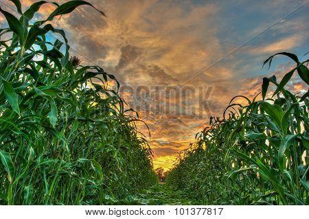 Vibrant sky dividing the crops