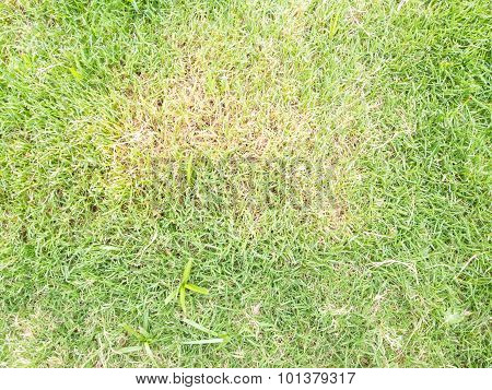 Diseases Of Turf