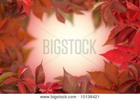 Red Grape Leaves Frame