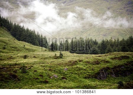 Low cloud over a pine forest in the Scottish Highlands, Scotland, UK
